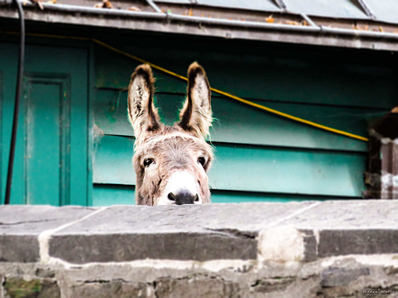 Nosey Donkey by siobhan@ www.siobhanmariephotography.com