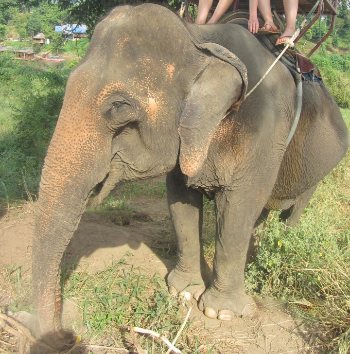 Is irresponsible tourism partially to blame for the unethical treatment of people &animals